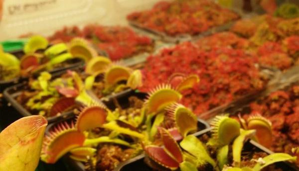 Biotehnologii agricole